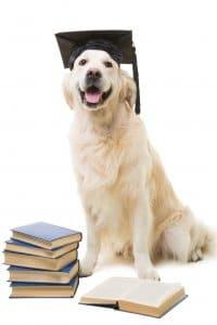 Golden Retriever mit Doktorhut vor einem Stapel geschlossener und einem aufgeschlagenen Buch