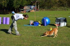 Trainerin und mittelgroße Mischlingshündin verbeugen sich respektvoll voreinander