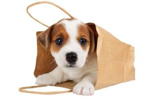 Hundewelpe in Einkaufstasche
